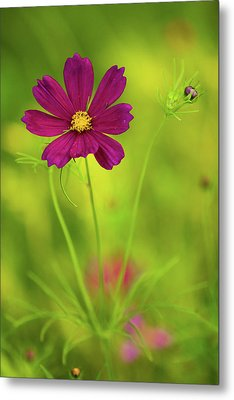 Wildflower Metal Print by Image by Rebecca Weaver, RWeaverNest Photography