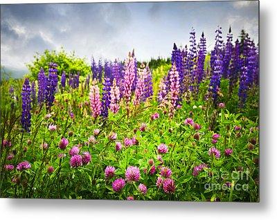 Wildflowers In Newfoundland Metal Print by Elena Elisseeva