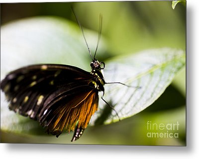 Wings Metal Print by Leslie Leda