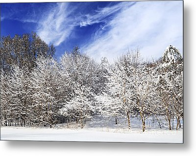 Winter Forest Covered With Snow Metal Print by Elena Elisseeva
