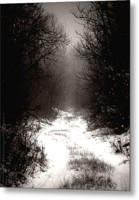 Winter IIi Metal Print by Mimulux patricia no