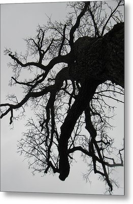 Winter Tree-1 Metal Print by Todd Sherlock