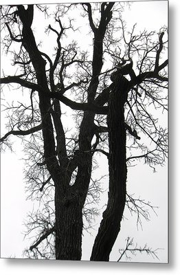 Winter Tree-2 Metal Print by Todd Sherlock