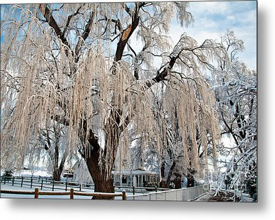 Winter Willow Metal Print by Harry Strharsky