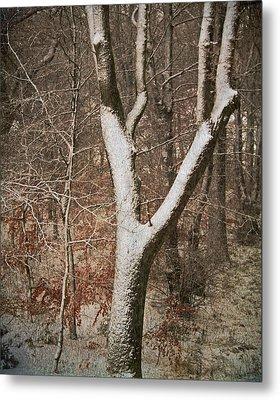Winter Woods Metal Print by Odd Jeppesen