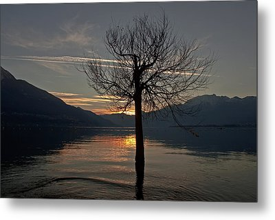 Wintertree In The Evening Metal Print by Joana Kruse
