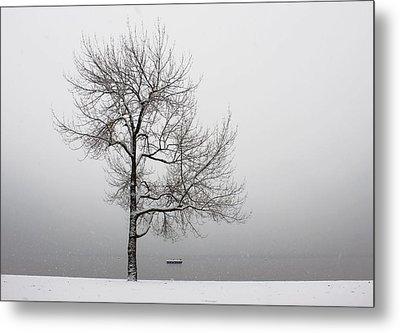 Wintertrees Metal Print by Joana Kruse