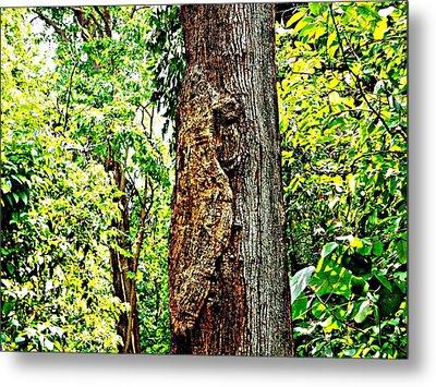 Woodpecker Tree Metal Print by Piety Dsilva