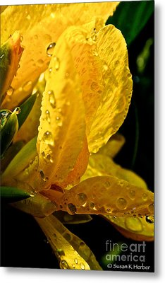 Yellow Canna Lily Metal Print by Susan Herber