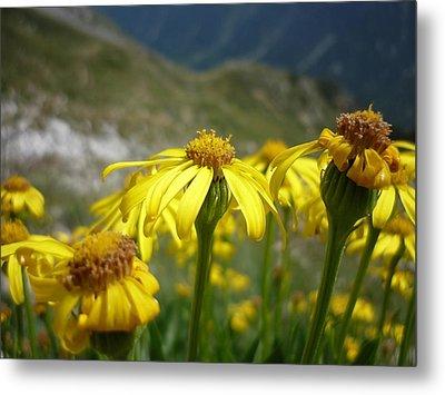 Yellow Mountain Flowers Metal Print by Martin Marinov
