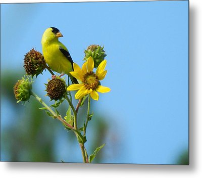 Yellow On Yellow Metal Print by Don L Williams