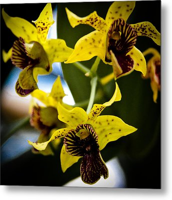 Yellow Orchids Metal Print by David Patterson