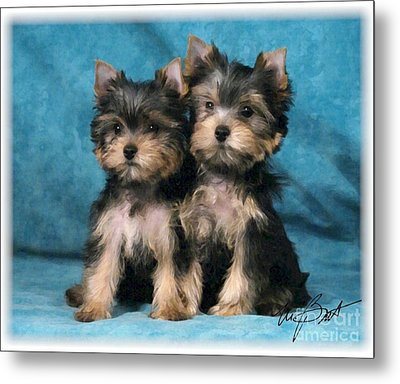 Yorkshire Terrier Pups 2 Metal Print by Maxine Bochnia