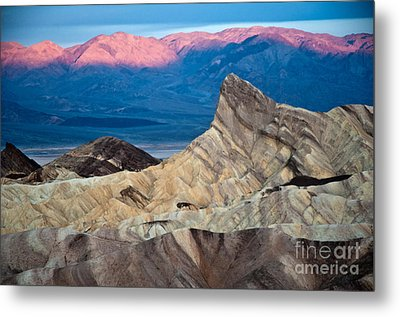 Zabriskie Point Dawn Metal Print by Jim Chamberlain