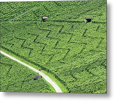 Zig-zag In Vineyards Metal Print by Ursula Sander