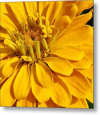 Zinnia Close Up Metal Print by Bruce Bley