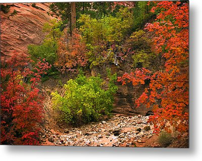 Zion Fall Colors Metal Print by Dave Dilli