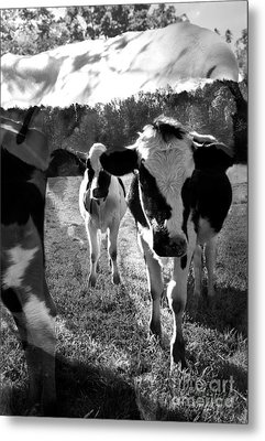 Zoey And Matilda In The Blissful Sun Metal Print by Danielle Summa