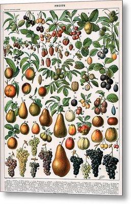 Illustration Of Fruit Varieties Metal Print by Alillot
