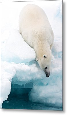 Arctic Composition Metal Print by Marco Gaiotti