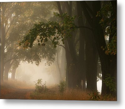 Autumn Metal Print by Fproject - Przemyslaw Kruk