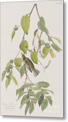 Autumnal Warbler Metal Print by John James Audubon