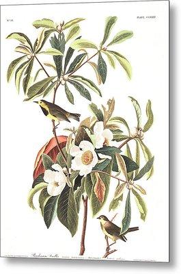 Bachman's Warbler  Metal Print by John James Audubon