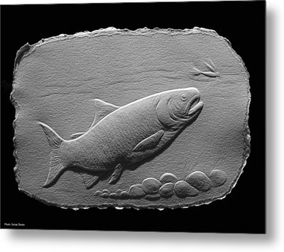 Bass Fish Metal Print by Suhas Tavkar