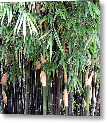 Black Bamboo Metal Print by Mary Deal