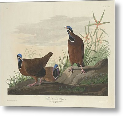 Blue-headed Pigeon Metal Print by John James Audubon