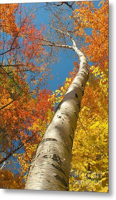 Canadian Autumn Metal Print by Mircea Costina Photography
