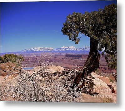 Canyonlands 4 Metal Print by Marty Koch