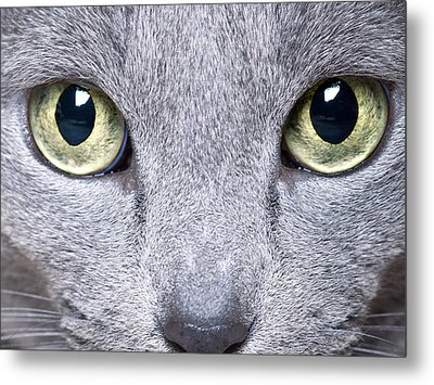 Cat Eyes Metal Print by Nailia Schwarz