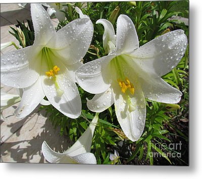 Christmas Lilys Metal Print by Joyce Woodhouse