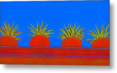 Colorful Potted Plants Mexico Metal Print by Carol Leigh