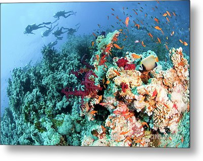 Coral Reef  Metal Print by Hagai Nativ