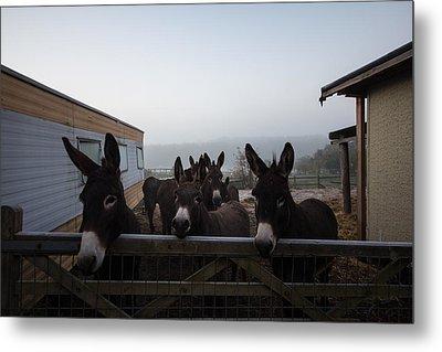 Donkeys Metal Print by Dawn OConnor