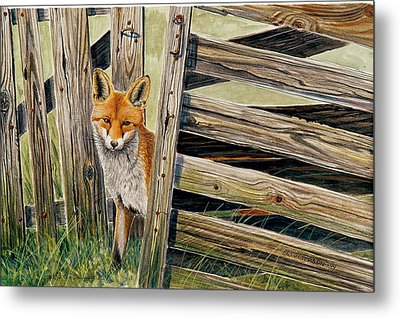Fox At The Gate Metal Print by Dag Peterson