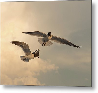 Gliders Metal Print by Don Spenner