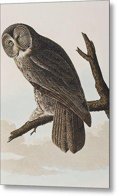 Great Cinereous Owl Metal Print by John James Audubon