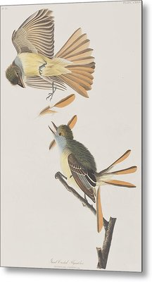 Great Crested Flycatcher Metal Print by John James Audubon