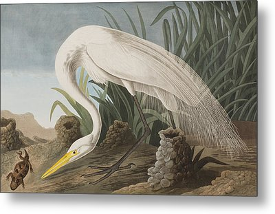 Great Egret Metal Print by John James Audubon