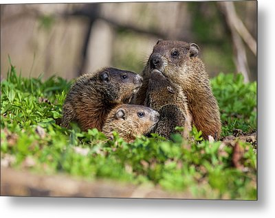 Happy Family Metal Print by Mircea Costina Photography