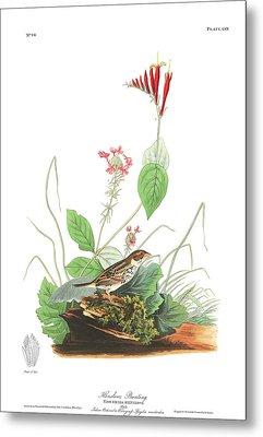 Henslow's Bunting  Metal Print by John James Audubon
