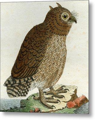 Hutum Owl Metal Print by John Latham
