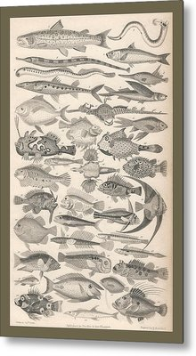 Ichthyology Metal Print by Captn Brown