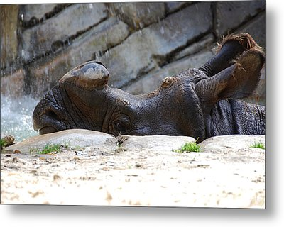Indian Rhinoceros Metal Print by Thea Wolff