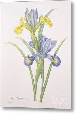 Iris Xiphium Metal Print by Pierre Joseph Redoute