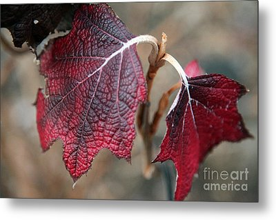 Leaves Metal Print by Amanda Barcon