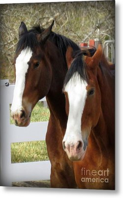 Magnificant Horses - The Clydesdales -16 Metal Print by Diane M Dittus